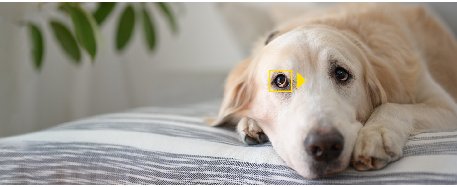 Z 7 Animal Eye Detection autofocus dog Labrador