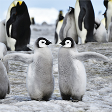 北極スマイル・南極スマイル カレンダー 2020 4月