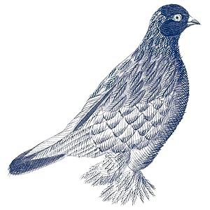 pombo-cambalhota