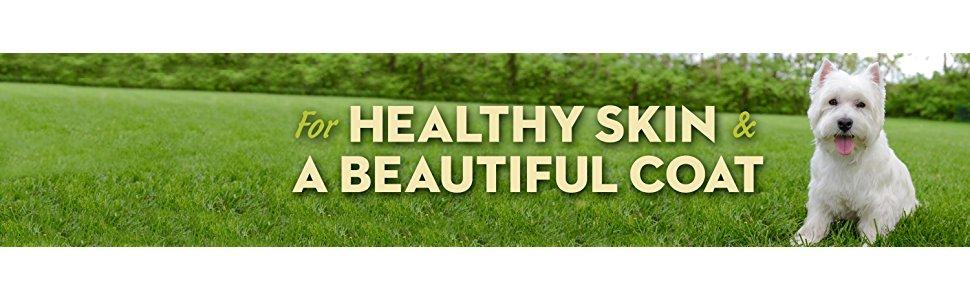 dog food for healthy skin and coat