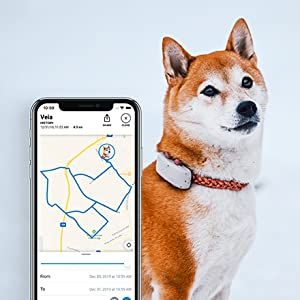 gps tracker for dogs location history tractive