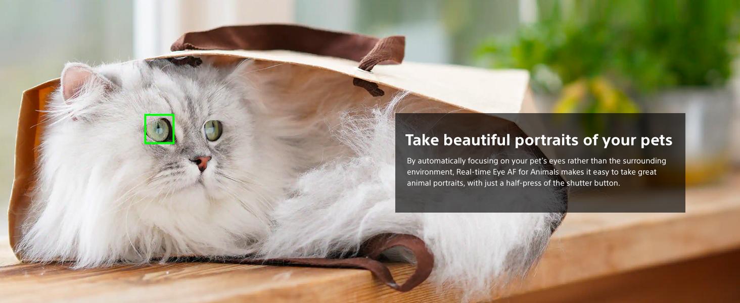 Real time eye AF for animals