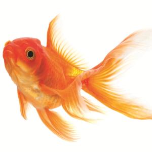 tetra goldfish flake fish food complete fish food for all goldfish