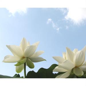 お盆 おぼん 盆棚 精霊棚 お盆飾り 仏壇 お盆セット 盆花 お仏壇 仏壇