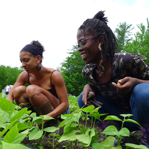 liberation, land, organic, farming, farming guide, food justice, food system, equality