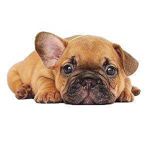 Cibo secco per cani, per cuccioli e cani giovani, con riso e agnello, per tutte le razze
