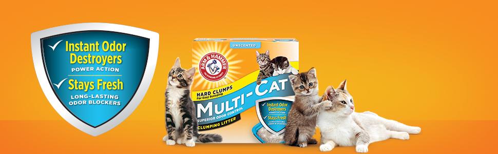 Best Unscented Dust Free Cat Litter