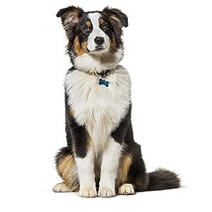 Alimento seco para perros adultos de todas las razas con cordero y arroz