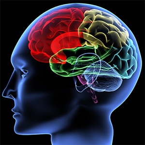 brain learning, memory, and other cognitive functions