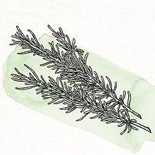 Woody Herbs (Lamiaceae Family)