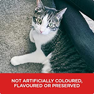 Science Diet, cat food, kitten food, cat food pouches, pouches, wet cat food, dry cat food, cat