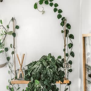 Wild Interiors, Wild at Home, Hilton Carter, plant styling, plants and interiors, indoor jungle