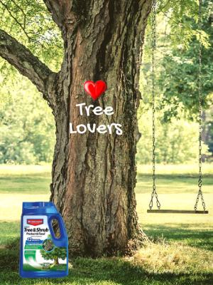 bayer, bioadvanced, tree, shrub, fertilizer