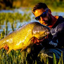 deeper, common carp, carp