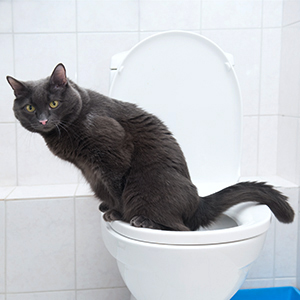 Cat Teaches Itself How to Use a Toilet