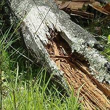 fatwood, kindling, natural, felled trees
