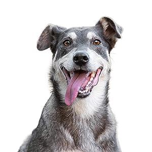 The Hunger of the Wolf - Pienso de cordero y patatas para perros adultos de todas las razas, fórmula delicada sin cereales, 14 kg