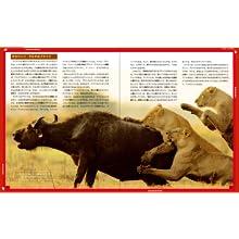 ライオン 動物 絶滅危惧 ミッション・ライオン・レスキュー ココリコ ココリコ田中 田中直樹 ナショジオ ナショジオ・キッズ