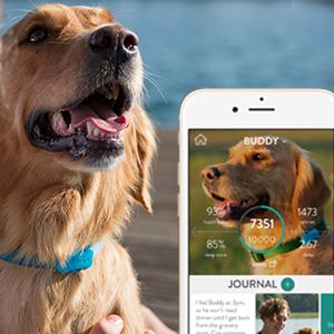 Dog activity monitor, Dog health monitor, Dog fitness tracker, Dog activity tracker