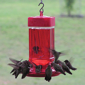 bird feeder, hummingbird feeder, hummingbird feeders, bird feeders, hanging feeder