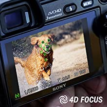 fast focus, quick focus, action images, sports camera, sharp images, bird photography
