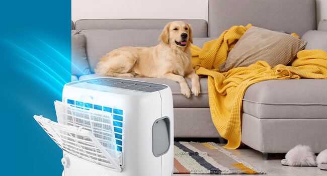 Protect Your Dehumidifier from Dust amp; Pet Hair