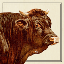 Cow illustration that shows how EPIC beef bars are made from 100% grass fed cows.