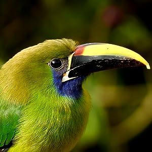 Costa Rica, birdwatching, wildlife, national park, refuge