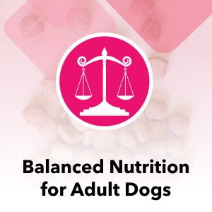 A Balanced nutrition for Adult Dogs which maintain the Ideal Weight keeping them Active and Agile