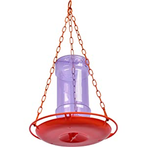 oriole feeder, jelly feeder, oriole jelly feeder, hanging chain