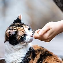 buddy biscuits grain gluten free tender chicken vegetables cat treats soft texture