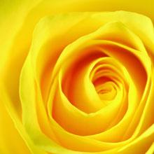 L'ANZA Healing ColorCare