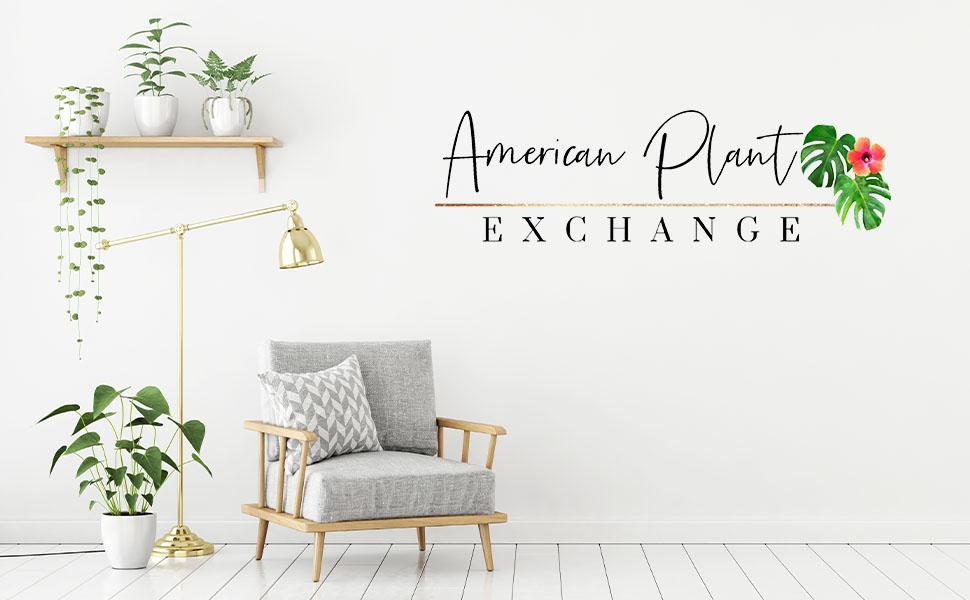 Live plants, house plants, monstera, anthurium, pothos, indoor plants, houseplants