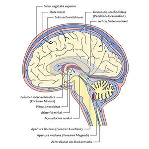 neuroanatomie nachschlagen lernen verstehen. Black Bedroom Furniture Sets. Home Design Ideas