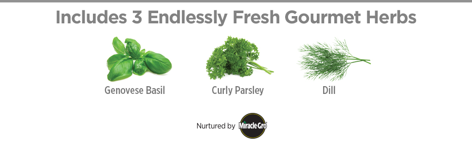 harvest 3 herbs