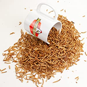 mealworms, dried mealworms