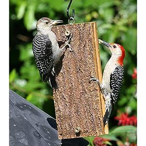 Birds Choice Sandwich Suet Feeder for Woodpeckers