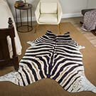 MT zebra