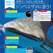 沖縄美ら海水族館で巨大魚ジンベエザメに会う!