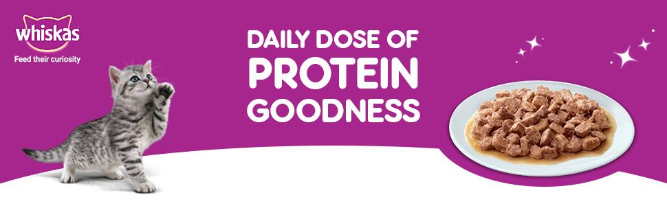 Protein goodness for kitten