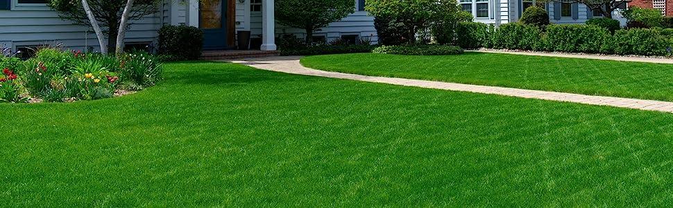 Grass, grass seed, seed, perennial ryegrass, perennial ryegrass seed, lawn, lawn seed, greenview