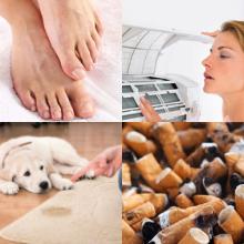 usos aerosol tabaco pies perro