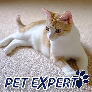Amazon Com Resolve Pet Expert Carpet Amp Upholstery Cleaner