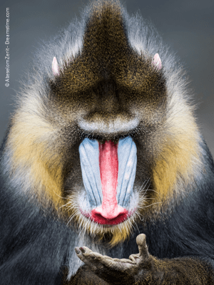 Zoology, Science of Animals
