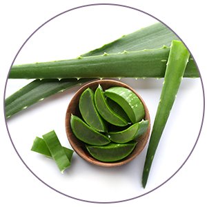 Aloe Vera extract help protect skin from damage and inflammation