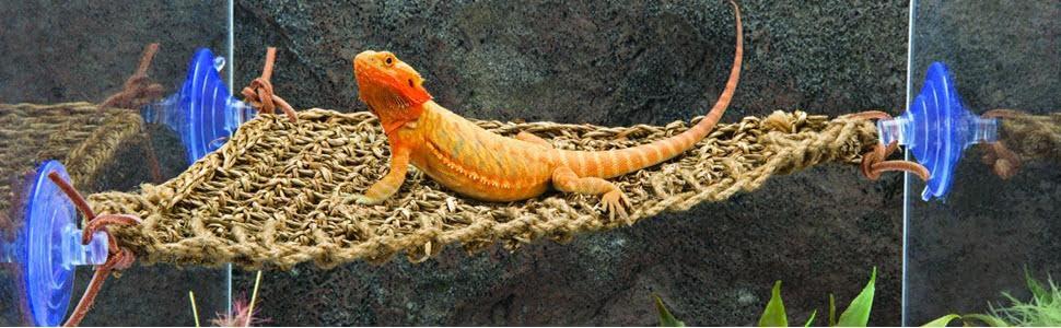 Amazon.com : Penn Plax Lizard Lounger, 100% Natural