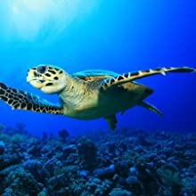 ocean;clan;recycle;earth;protect