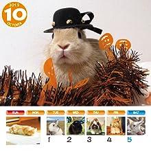 うさぎと暮らす うさぎと暮らす壁掛けカレンダー かわいい ペットカレンダー