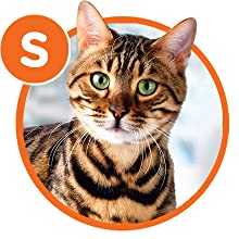 Size, Ideal Weight, Overweight Cat, Cat Weight Management, Cat Weight Control, Cat Nutrition