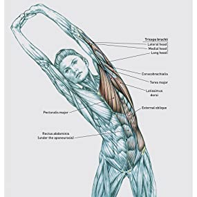 delaviers stretching anatomy free pdf download